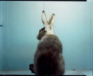 Johannes Inderst, dalla serie Fauna, 2010_01